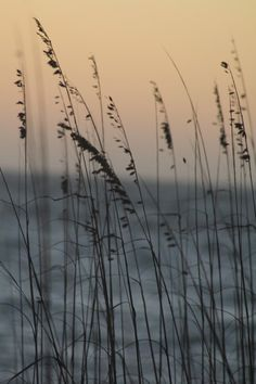 Items similar to sea oats photograph on Etsy Texture Photography, Ocean Photography, Stargazing, Oats Food, Seaside, Serenity, Coastal, Ocean Girl, Sea Pictures