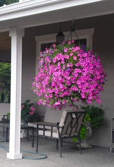 porch flowers