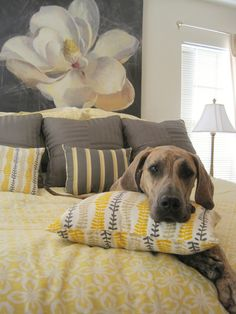 Gorgeous gray and yellow color scheme. And I wish I could snuggle with that dog!