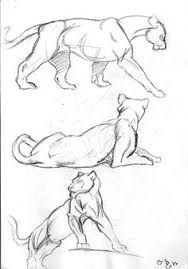 Image result for cat motion jumping anatomy