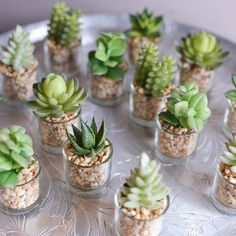 Succulents and Saturdays. Two of my fav things! What& your fav part of the weekend? Succulent Wedding Favors, Succulent Gifts, Succulent Care, Succulent Gardening, Succulent Terrarium, Succulents In Glass, Cacti And Succulents, Planting Succulents, Planting Flowers