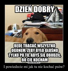Funny Dogs, Funny Memes, Polish Memes, Happy Photos, Everything And Nothing, Dumb And Dumber, True Stories, Geek Stuff, Lol