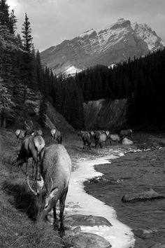 Wilderness // Hiking // The Great Outdoors // His Creation Beautiful Creatures, Animals Beautiful, Majestic Animals, Alaska, Deer Family, Elk Hunting, Mule Deer, All Gods Creatures, Mythical Creatures
