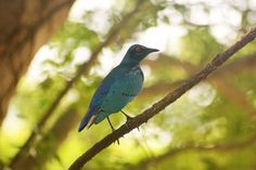 Amazing bird spotted in Accra, Ghana by littledutchboy, via Flickr