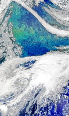 Phytoplankton bloom in the North Atlantic