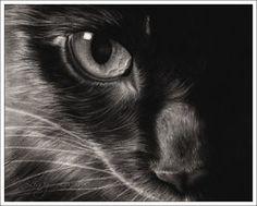 Black Beauty by *Zindy on deviantART