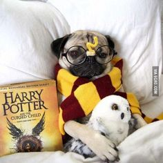 PetsLady's Pick: Funny Harry Potter Day Dog Of The Day...see more at PetsLady.com -The FUN site for Animal Lovers