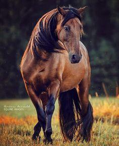 Rociero, P.R.E. horse Photo by: @carinaforestinmay (instagram) I'm a horseaddict