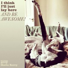 Greyhound being awesome