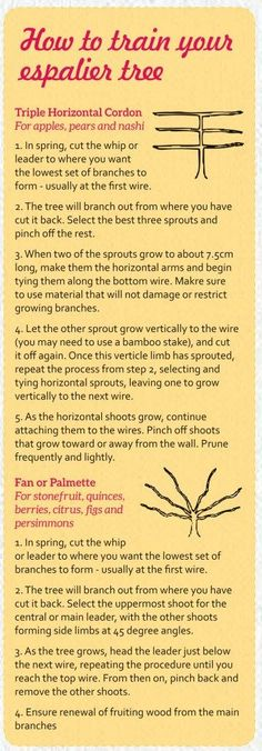 How to Espalier Fruit Trees - Palmers Garden Centre For some, the idea of fruit tree shapes might se
