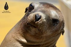What a cute sea lion face!!