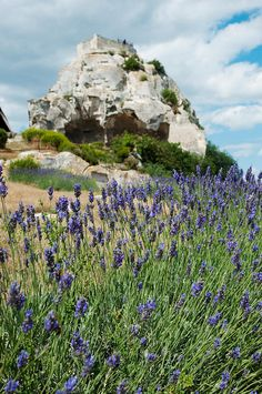 Lavender field in front of ruins of fortress on a rock, Les Baux-de-Provence, Bouches-Du-Rhone, Provence-Alpes-Cote d'Azur, France