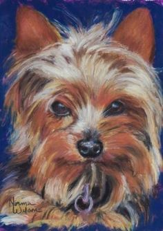 Yorkshire Terrier, painting by artist Norma Wilson