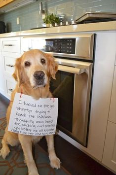 I turned on the gas stovetop trying to reach the leftovers. Thankfully mom heard the clicking and smelled gas before we all exploded. (Then I ate her iPad. Sorry, Mom.) Dog shaming website is hilarious! Cute Funny Animals, Funny Animal Pictures, Funny Cute, Funny Dogs, Hilarious, Smart Animals, Super Funny, Cute Puppies, Cute Dogs