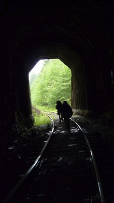 This unforgettable hike in Oregon will lead you along an abandoned railroad through a gorgeous forest. Can't wait to hike this! Oregon Road Trip, Oregon Travel, Travel Usa, Hiking Spots, Hiking Trails, Tillamook Bay, Oregon Living, State Forest, Oregon Coast