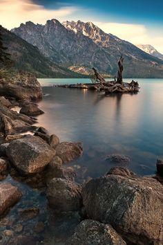 Dead Tree at Jenny Lake