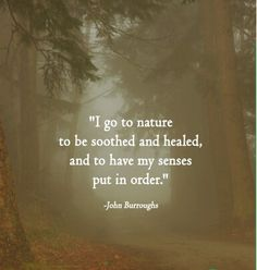 I go to nature to be soothed and healed, and to have my senses put in order. - John Burroughs  #quotes