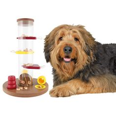 Trixie Gambling Tower Dog Toy at PetSmart. Shop all dog interactive toys online Dog Activities, Activity Games, Dog Puzzles, Puzzle Toys, Dog Collar Tags, Interactive Dog Toys, Wild Bird Food, Pet Memorials, Dog Supplies