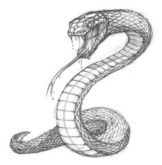 Snake Sketch, Snake Drawing, Snake Art, Baby Drawing, Art Drawings Sketches, Animal Drawings, Pencil Drawings, Drawings Of Snakes, Tattoo Sketch
