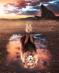 Lion King Poster made out of metal. Inspiring image of The Lion King. Lion King Animals, Lion King Art, Lion Art, The Lion King, Wild Animals, Tier Wallpaper, Cute Cat Wallpaper, Animal Wallpaper, Rainbow Wallpaper