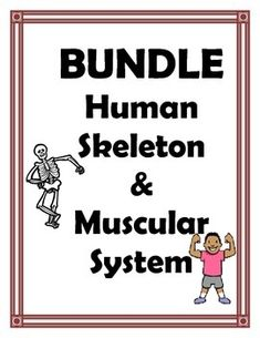Enchanted learning enchantedlearning lots of worksheets skeletal and muscular system bundle ccuart Choice Image