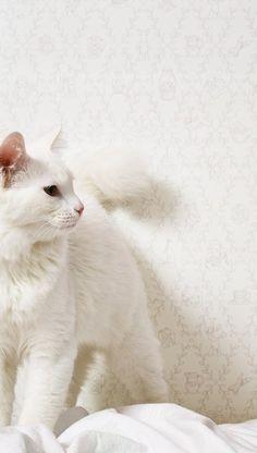 Tapet vinil Jack n Rose Grand Black And White Tuxedo, Betty White, White Kittens, Cat Names, Siamese, Kitty, Illustration, Wallpaper, Animals