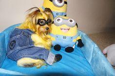Halloween Pet Costumes, 2013 - Petful