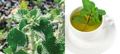 This Plant is Able to Cure Your Liver, Gall Bladder and Intestines Very Quickly
