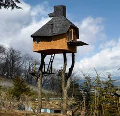 Tree house | World's Snaps | Houses and accessories | Pinterest | Trees,  World and Tree houses
