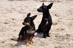 Chika and Rumble at Rosie's dog beach, Belmont Shore