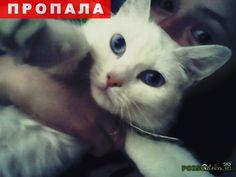 Пропала кошка помоги пожалуйста найти г.Самара http://poiskzoo.ru/board/read32545.html  POISKZOO.RU/32545 Помогите найти белую кошку, возраст около .. лет. Пропала в промышленном районе. Глаза голубые, на момент пропажи была в светлом ошейнике.   РЕПОСТ! @POISKZOO2 #POISKZOO.RU #Пропала #кошка #Пропала_кошка #ПропалаКошка #Самара