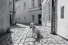 Doggie In Old Prague. Vintage Sepia Photograph by Jenny Rainbow Art Prints For Home, Home Art, Fine Art Prints, Framed Prints, Canvas Prints, Rainbow Art, Prague, Fine Art Photography, Monochrome