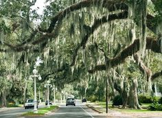 Bayou Teche Scenic Byway in Louisiana.  Things that make me excited about our upcoming new adventure.........love the live oaks and moss hanging from the trees.