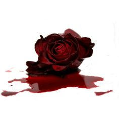 Color Splash Photo: I did teh editing myself. This Photo was uploaded by Red Flowers, Red Roses, Rose Blood, Blood Art, Gothic Aesthetic, Rose Images, Carmilla, Dark Photography, Lip Art