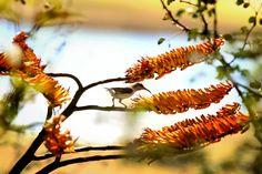 Natural Beauty, Dandelion, Nature, Flowers, Plants, Animals, Naturaleza, Animales, Animaux