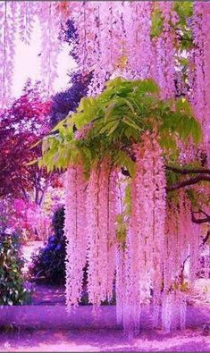 Flowers Beautiful Photography Trees 23 Ideas For 2019 Beautiful Nature Wallpaper, Beautiful Landscapes, Beautiful Gardens, Beautiful Flowers Garden, Wisteria Tree, Wisteria Garden, Flowering Trees, Nature Pictures, Pretty Flowers