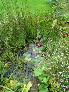 Small garden pond to attract amphibians