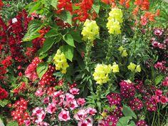 Flower power! Tamarack's student garden. Summer 2015