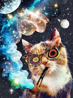 magic mushrooms psychedelic gif