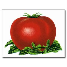Vintage Red Ripe Tomato, Food Fruits Vegetables Postcards - in a great kitchen, the decor influences the creator(s), Keep your kitchen cooking, both inside, & outside, the pots & pans {:-)