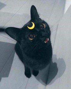 25 Halloween costumes for cats - Good Animals - 25 Halloween costumes for cats . 25 Halloween costumes for cats – Good Animals – 25 Halloween costumes for cats – Good Animal I Love Cats, Cute Cats, Funny Cats, Diy Funny, Baby Animals, Funny Animals, Cute Animals, Black Cat Aesthetic, Cat Icon