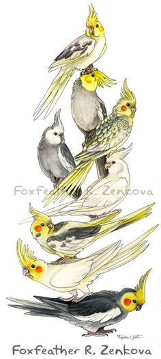 Cockatiel Art Stack Painting Print Wall art bird by foxfeather, $20.00