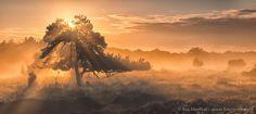 Tree of Light by Bas Meelker on 500px