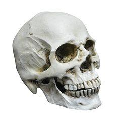 Amazon   YUANSHOP1 ドクロ 髑髏 スカル ハロウィン パーティー 飾り インテリア装飾 置物 小物 顎関節 離れ タイプ コスチューム用小物   季節用品 通販