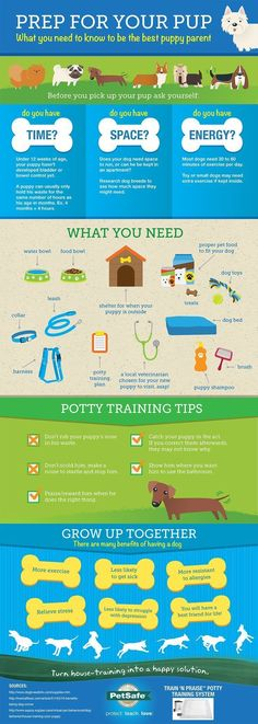Before you bring a puppy home, be prepared!