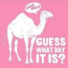 Happy Hump Day! Woop woop!