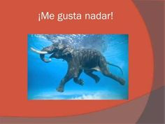 """▶ The """"Me Gusta"""" Song - YouTube"""