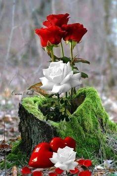 New flowers pink wallpaper romances ideas Beautiful Flowers Images, Beautiful Love Pictures, Beautiful Flowers Wallpapers, Flower Images, Amazing Flowers, Beautiful Roses, Hearts And Roses, Red Roses, Flowers Nature