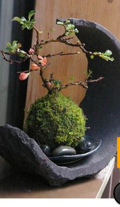 Japanese moss ball bonsai -Japanese flower arrangement (ikebana), which evolved… Moss Garden, Bonsai Garden, Garden Art, Garden Plants, Bonsai Trees, Succulents Garden, Garden Beds, Potted Plants, Ikebana