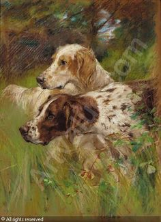 Hunting dogs - What a beautiful composition with the green.